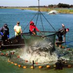 USDA Invests in Research to Improve Domestic Aquaculture